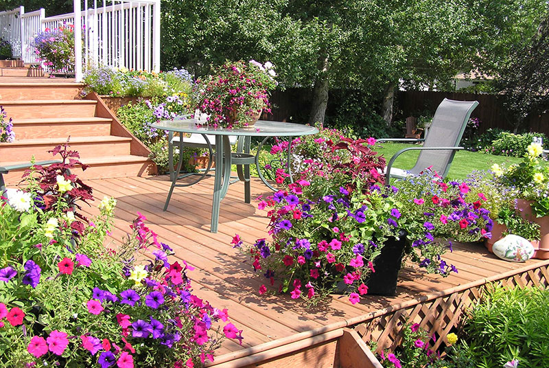 Pink and purple flowers in pots on wooden deck